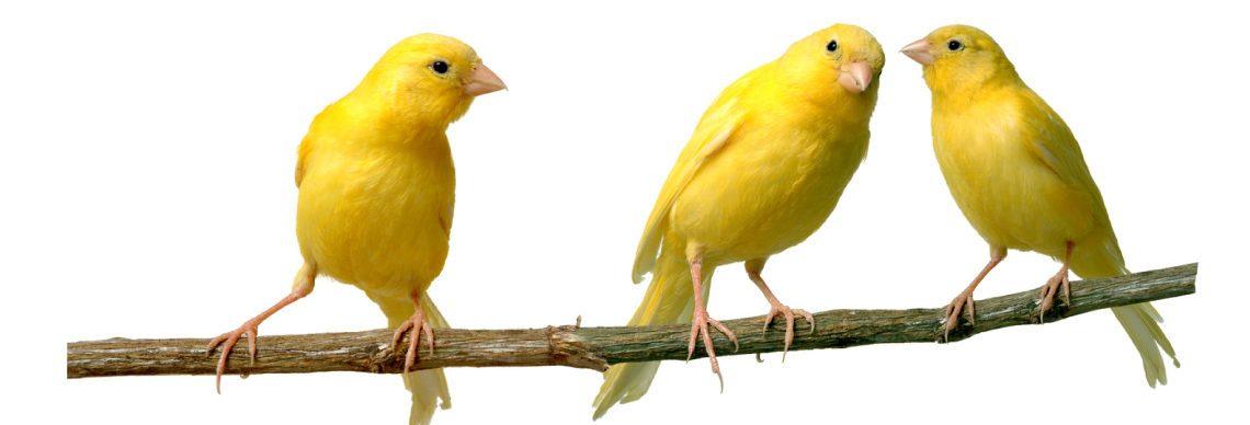 Canary Class Blog